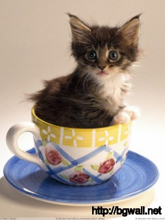 Cute Cat Is Sitting In A Cup Of Tea Wallpaper