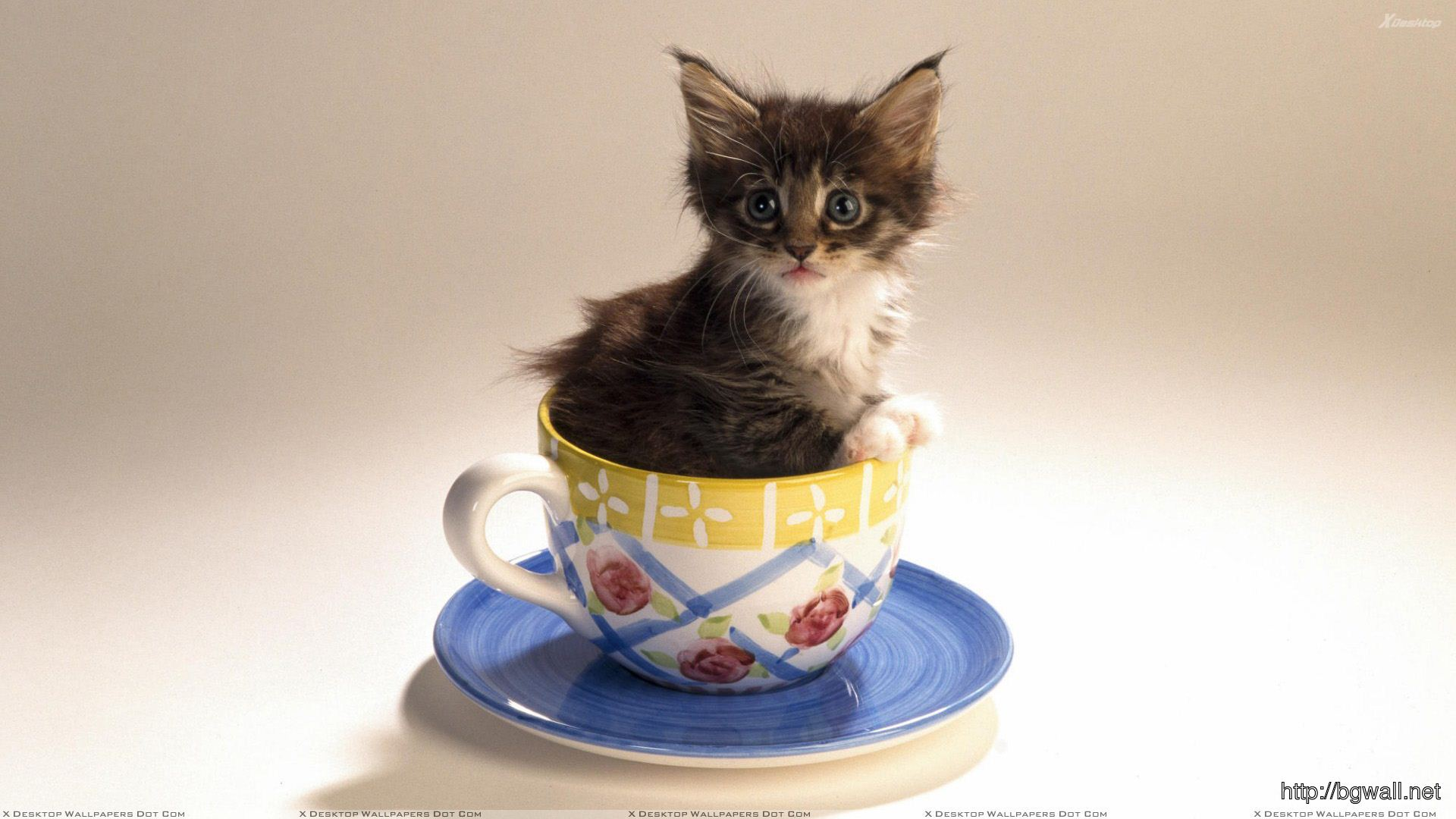 Cute Cat Is Sitting In A Cup Of Tea Wallpaper Background