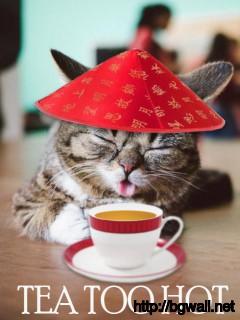 Cute Tea Cat Mobile Pic