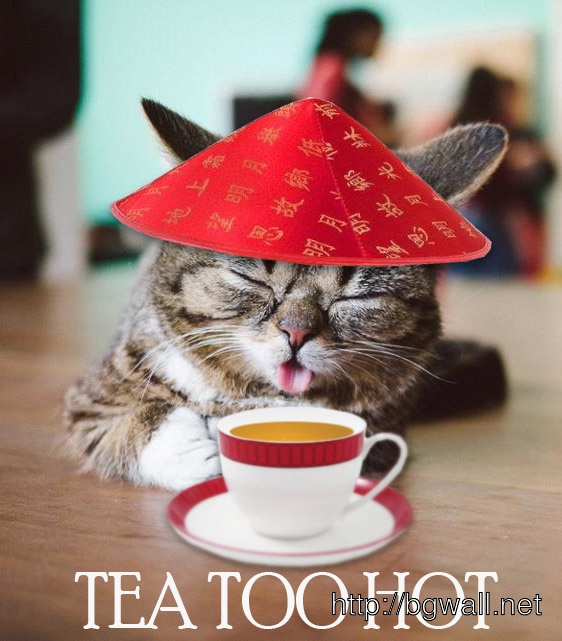 Cute Tea Cat Mobile Pic
