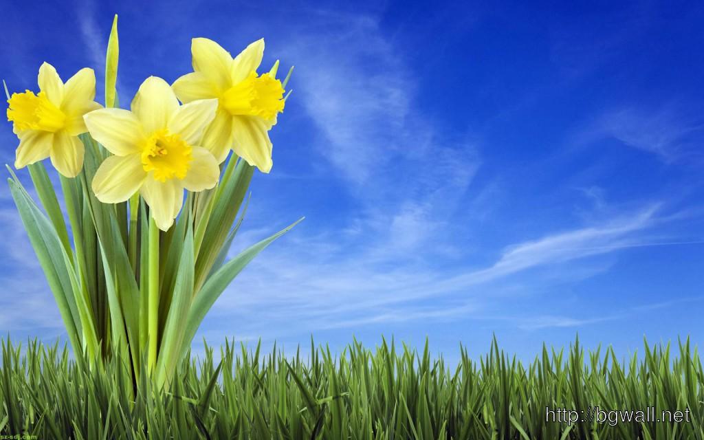 3D-Narcissus-Flower-Wa...