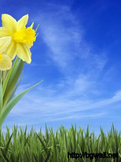3D-Narcissus-Flower-Wallpaper-HD