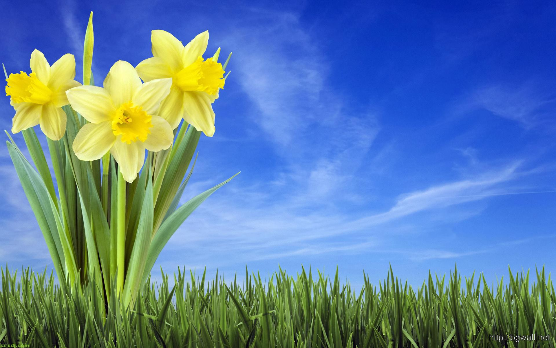 3D-Narcissus-Flower-Wallpaper-HD
