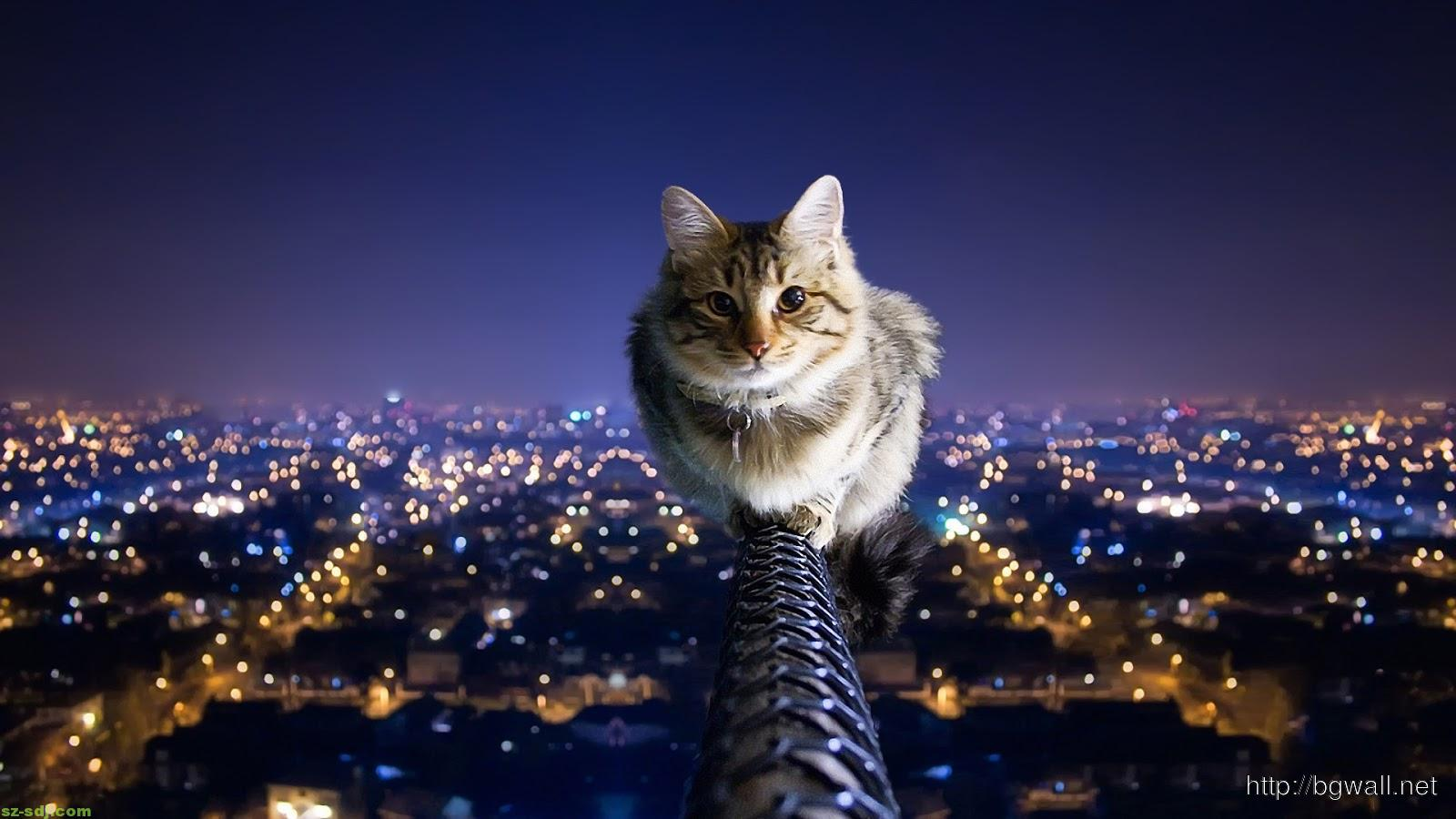 3d-cat-on-the-city-wallpaper