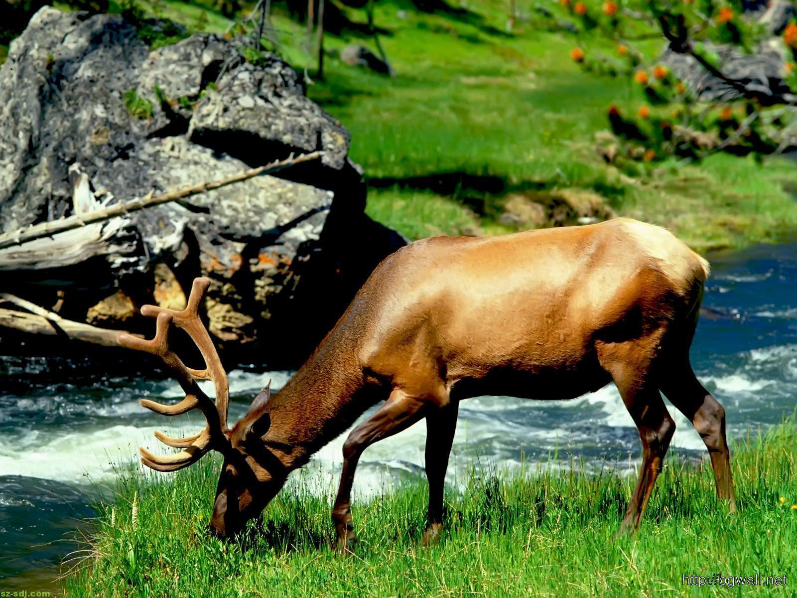 3d-deer-animal-wallpaper