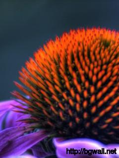 Amazing-Macro-Flower-Wallpaper
