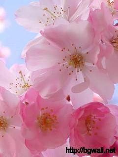 Beautiful-Pink-Flowers-Wallpaper