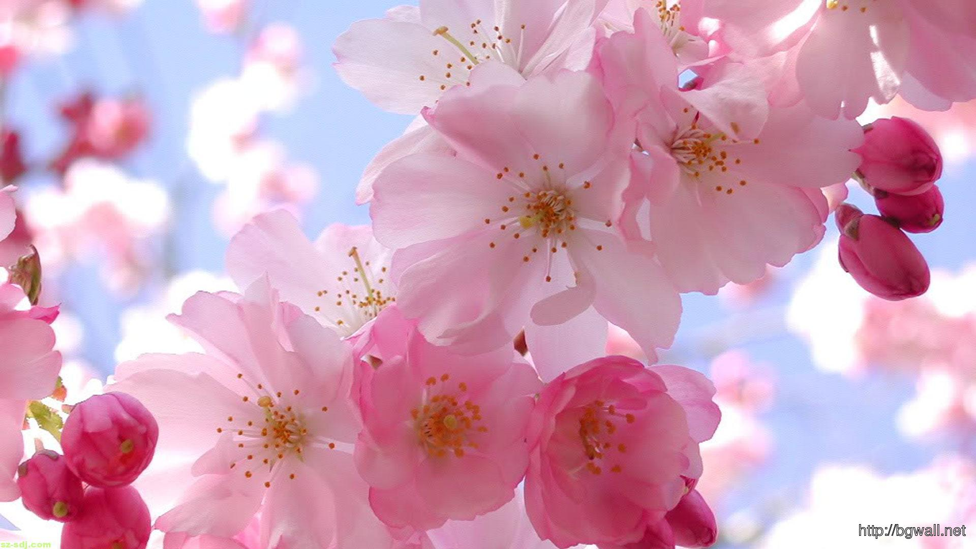 Beautiful-Pink-Flowers-Wallpaper