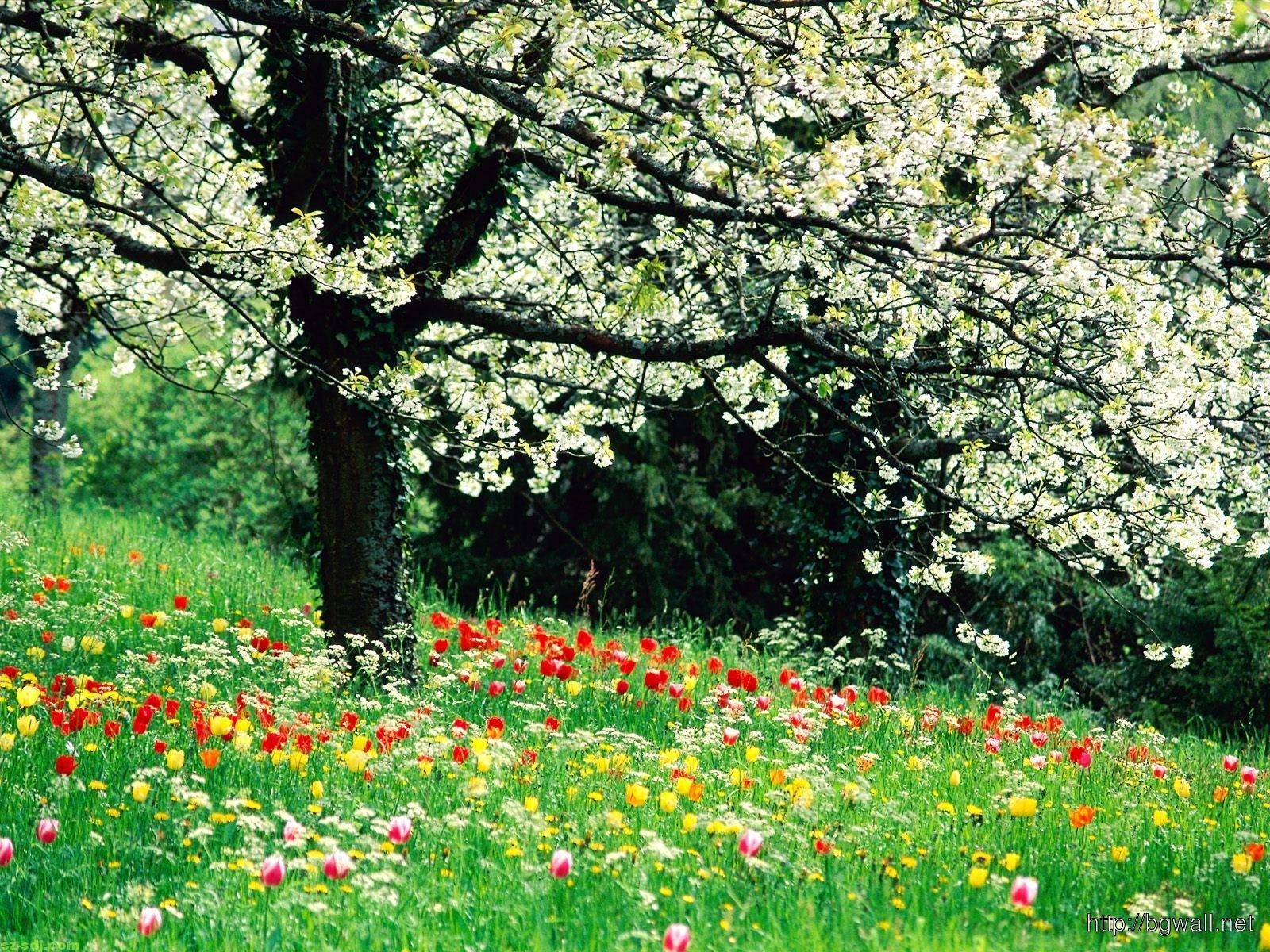 Beautiful-Spring-Flowers-Wallpaper-Download
