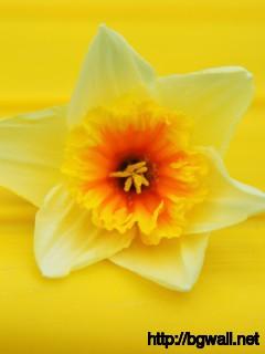 Beautiful-Yellow-Flower-Wallpaper