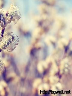 Beautifull-Cotton-Flower-Wallpaper-Macro-HD