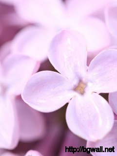 Best-White-Spring-Flower-Wallpaper-Desktop