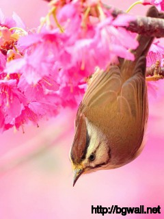 Bird-In-Flowers-Wallpaper-Free