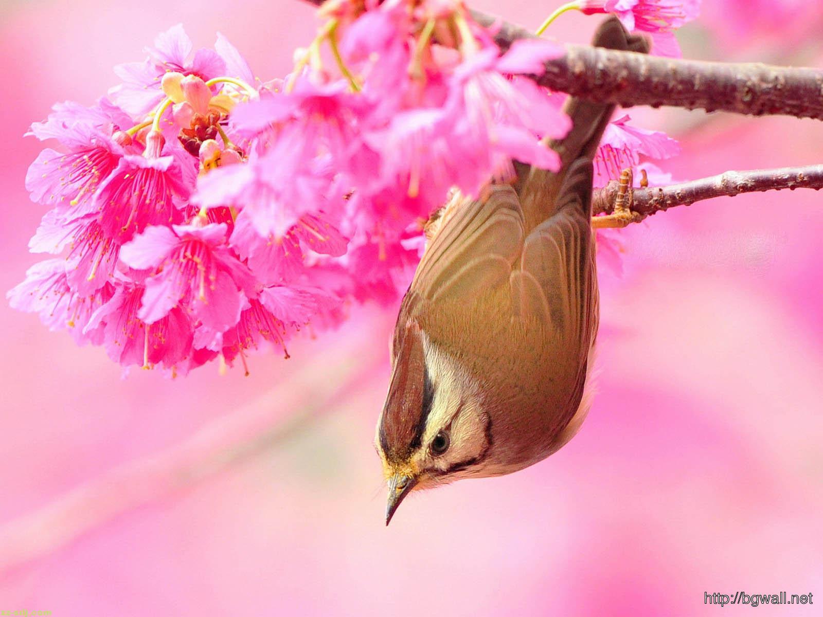Bird-In-Flowers-Wallpaper-Free