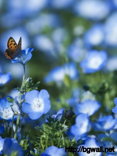Blue-Flowers-And-Butterfly-Wallpaper