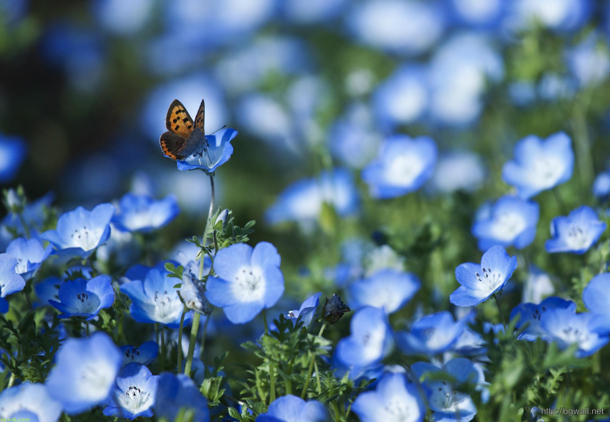 Blue Flowers And Butterfly Wallpaper Background Wallpaper Hd