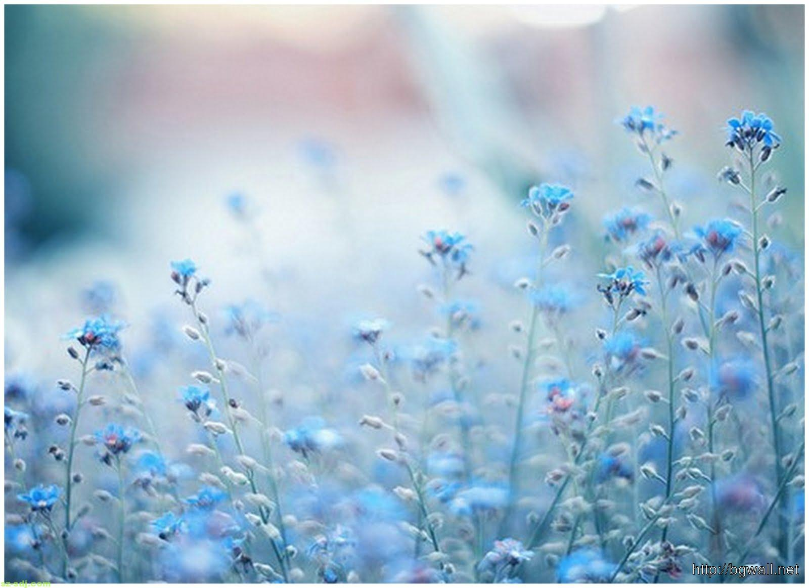 Blue Flowers Tumblr Wallpaper