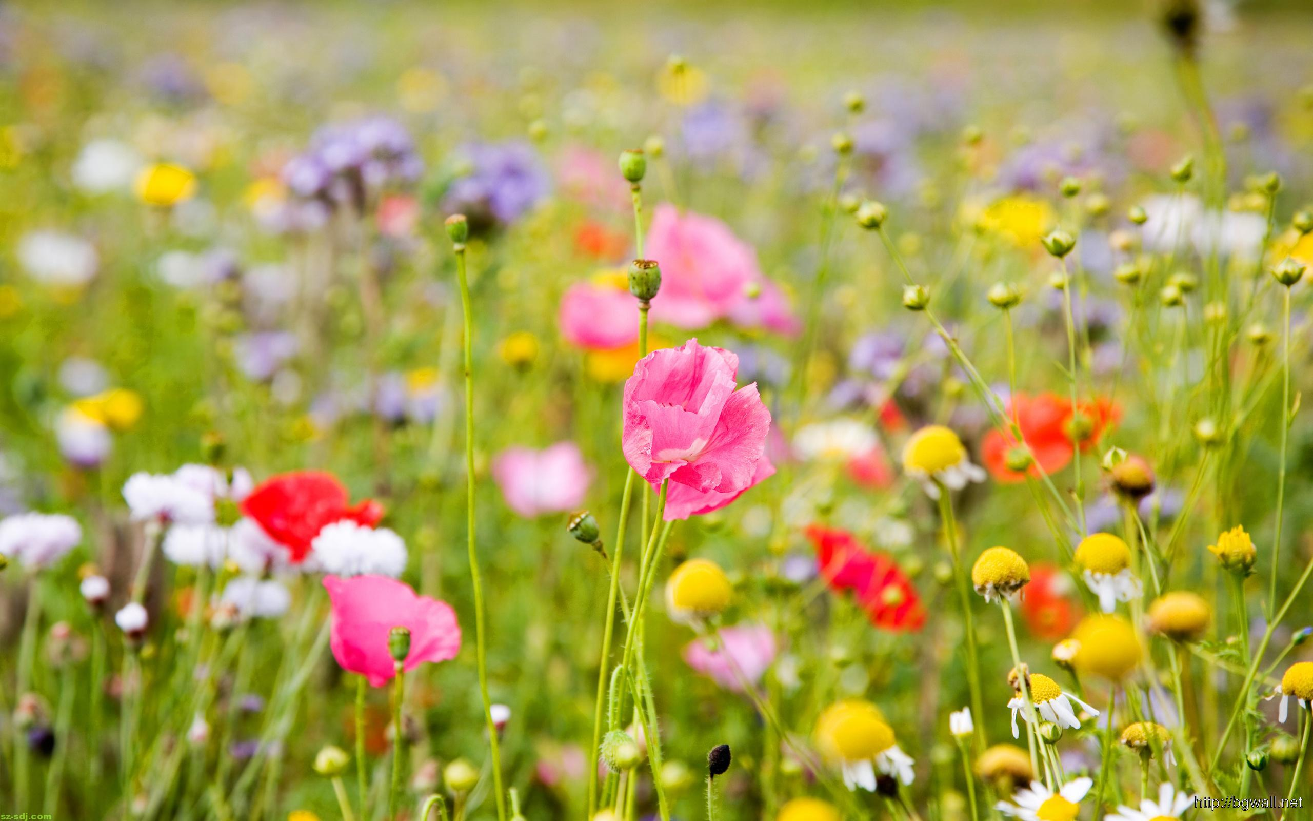 Colorful-Flower-Meadow-Wallpaper-High-Definition