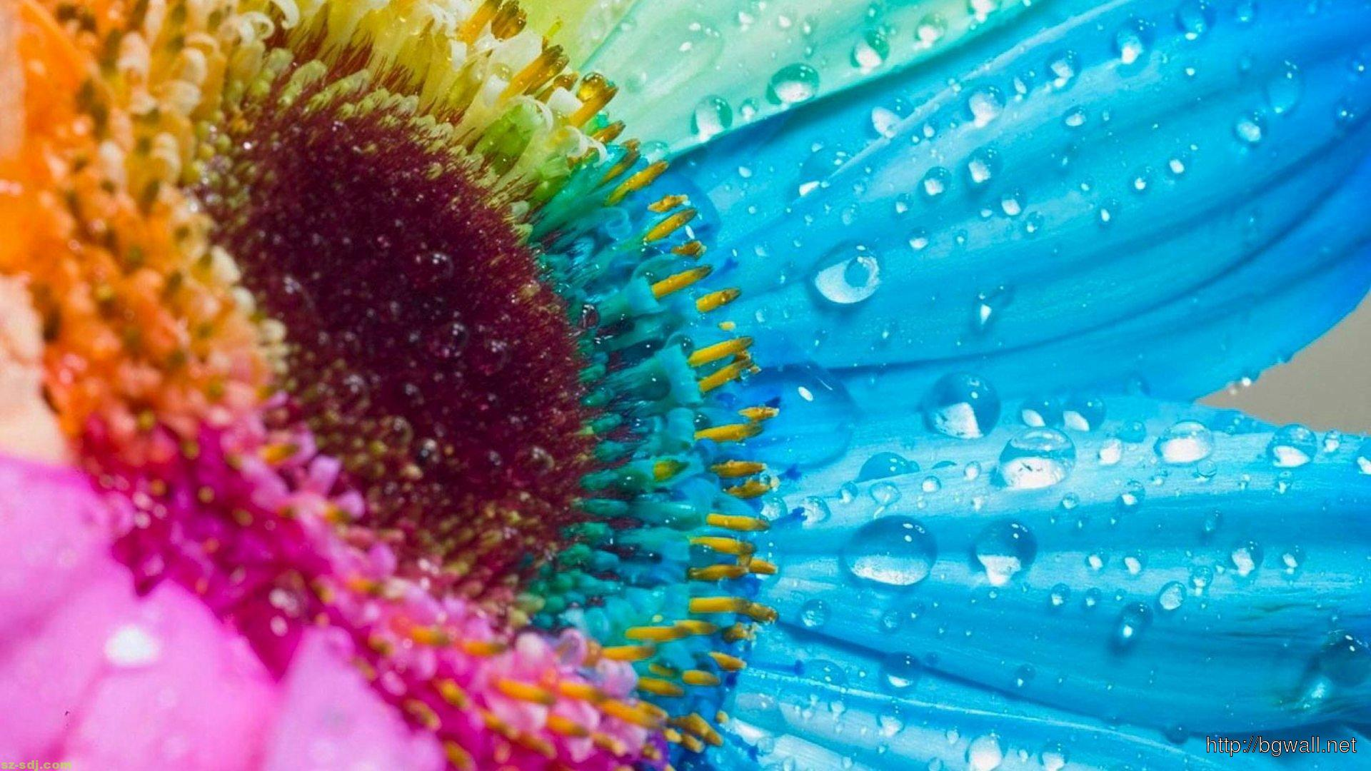 Colorful-Macro-Flower-Wallpaper-for-Android