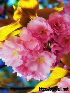 Cute-Pink-Flower-Wallpaper-HD