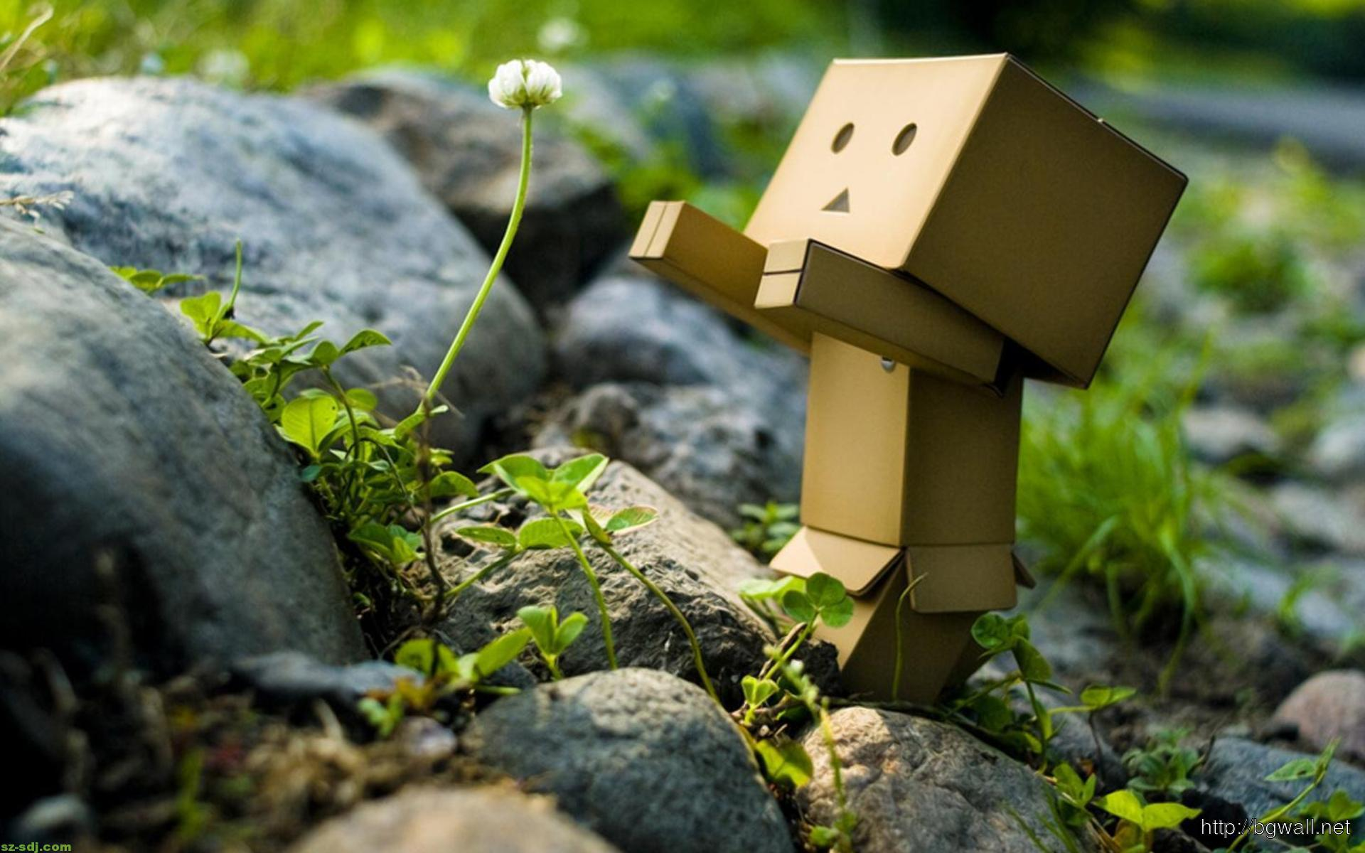 Danbo-With-Flower-Wallpaper-Picture