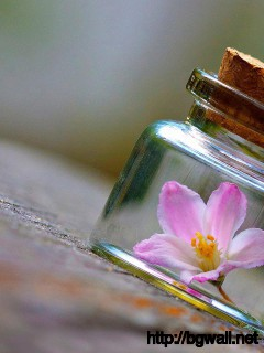 Flower-on-the-Bottle-Wallpaper-Android