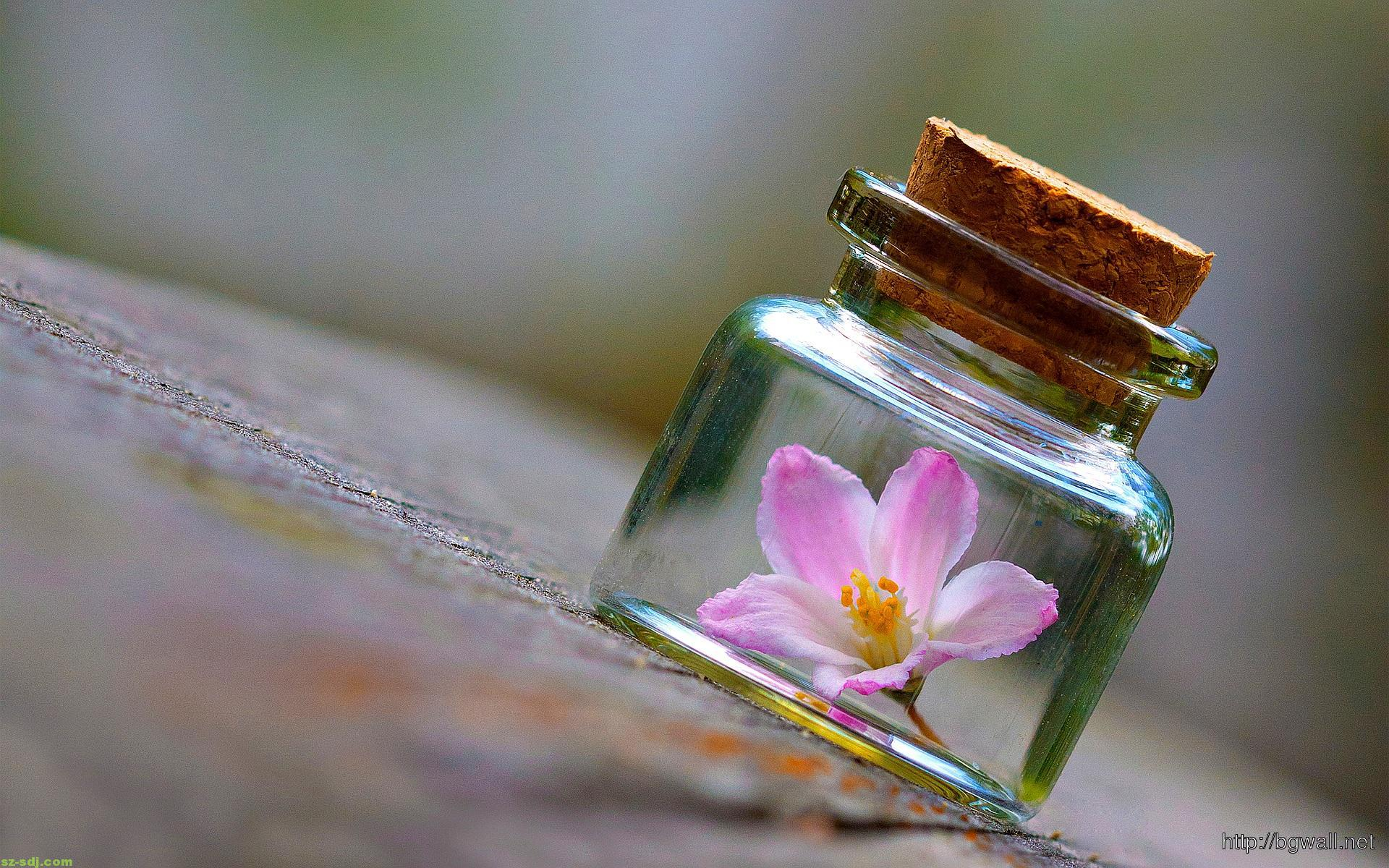 Flower-on-the-Bottle-Wallpaper-Android