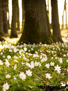 Flowers-In-Spring-Forest-Wallpaper-HD