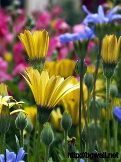 Flowers-Meadow-Spring-Wallpaper-Picture