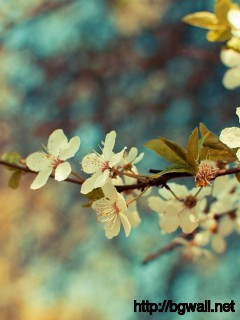 Flowers-Vintage-Efect-Wallpaper