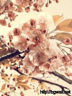 Flowers-Vintage-Tone-Wallpaper-High-Definition