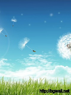 Fly-Dandelion-Flower-Wallpaper-PC