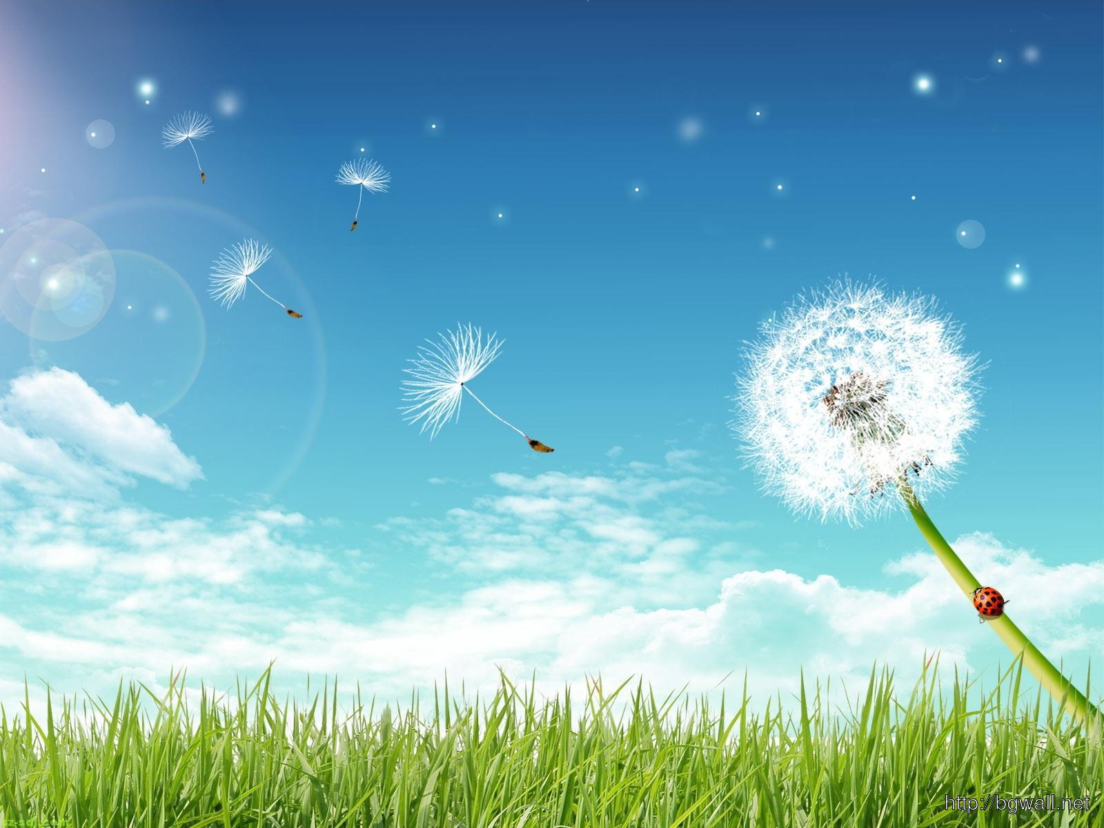 Fly Dandelion Flower Wallpaper Pc Background Wallpaper Hd