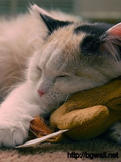 a-cat-enjoy-to-sleep-wallpaper-widescreen-windows-desktop