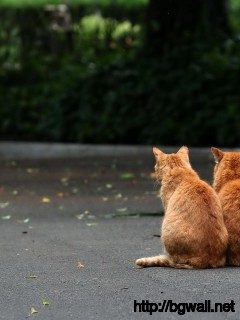 a-couple-of-brown-cat-on-the-street-wallpaper-image