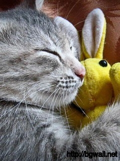 a-cute-cat-sleep-with-her-bunny-wallpaper-image-widescreen