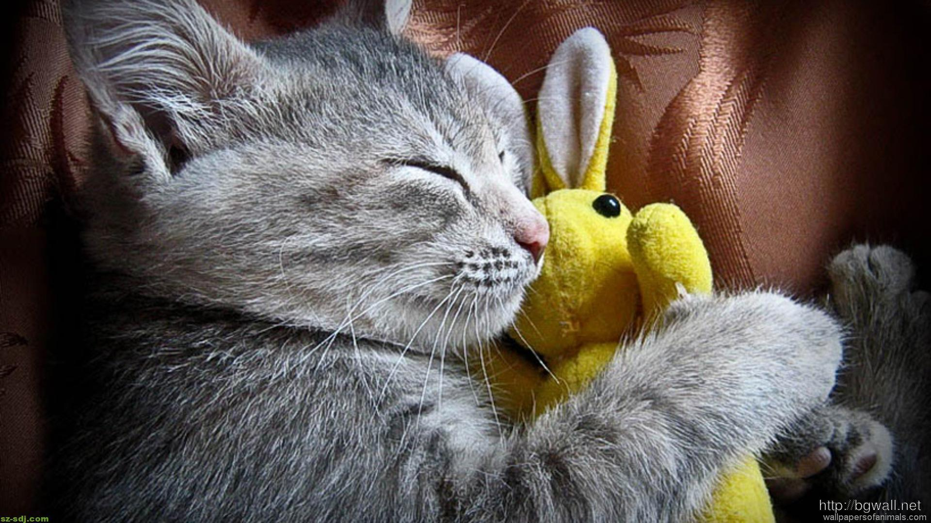 A Cute Cat Sleep With Her Bunny Wallpaper Image Widescreen Background Wallpaper Hd