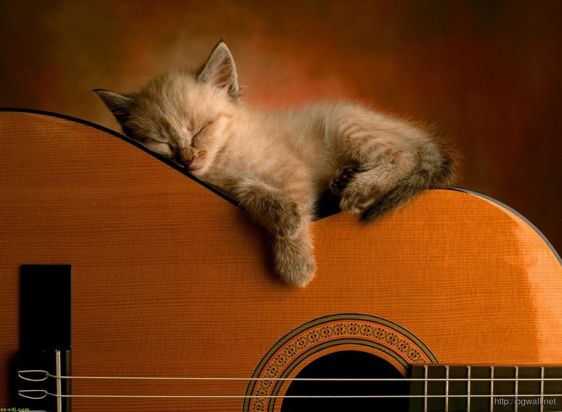 a-little-cat-get-sleep-while-playing-guitar-wallpaper-background