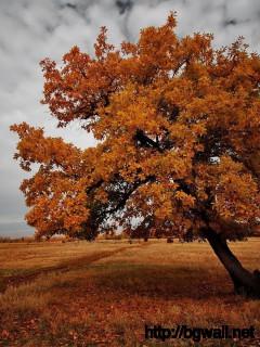 alone-brown-tree-desktop-wallpaper