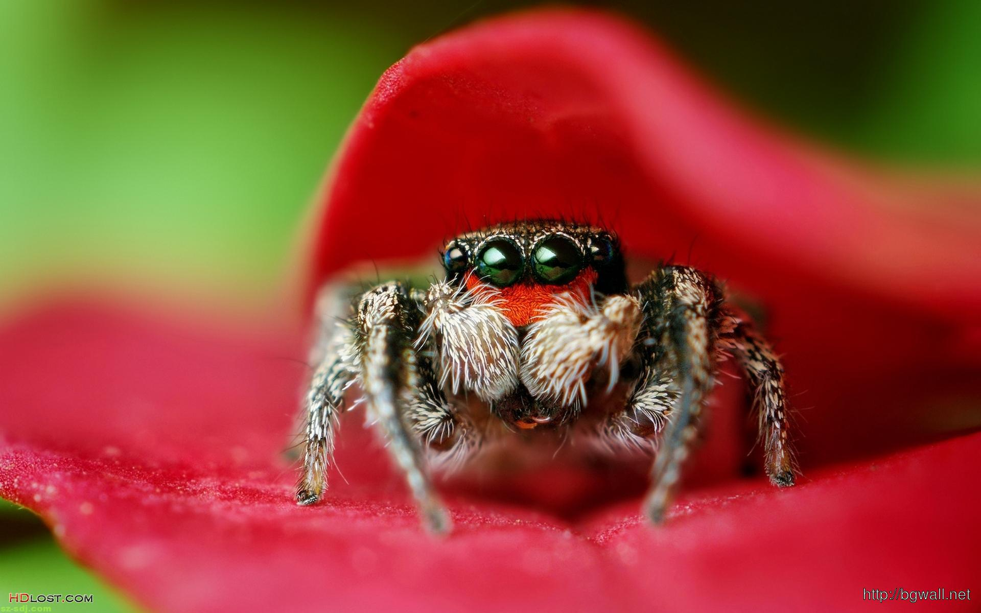 amazing-best-macro-spider-wallpaper