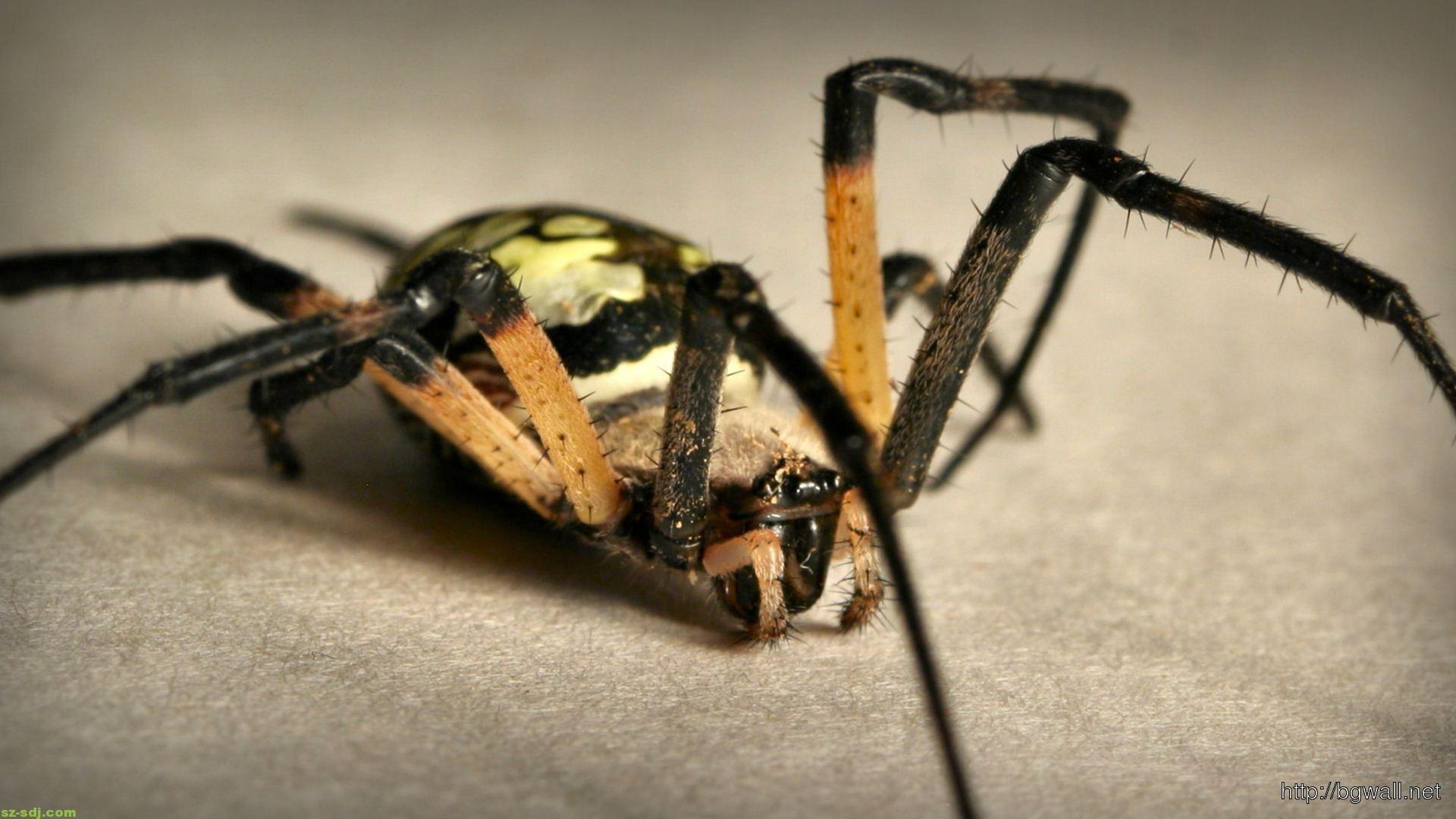 animals-spider-wallpaper-image