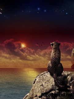 awesome-cheetah-fantasy-wallpaper