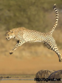 awesome-cheetah-jumping-wallpaper-pc