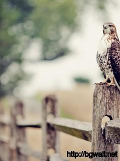 awesome-eagle-tumblr-wallpaper-hd