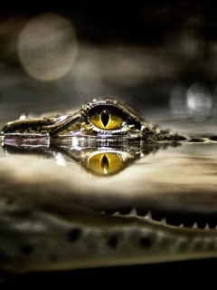 awesome-eye-alligators-wallpaper