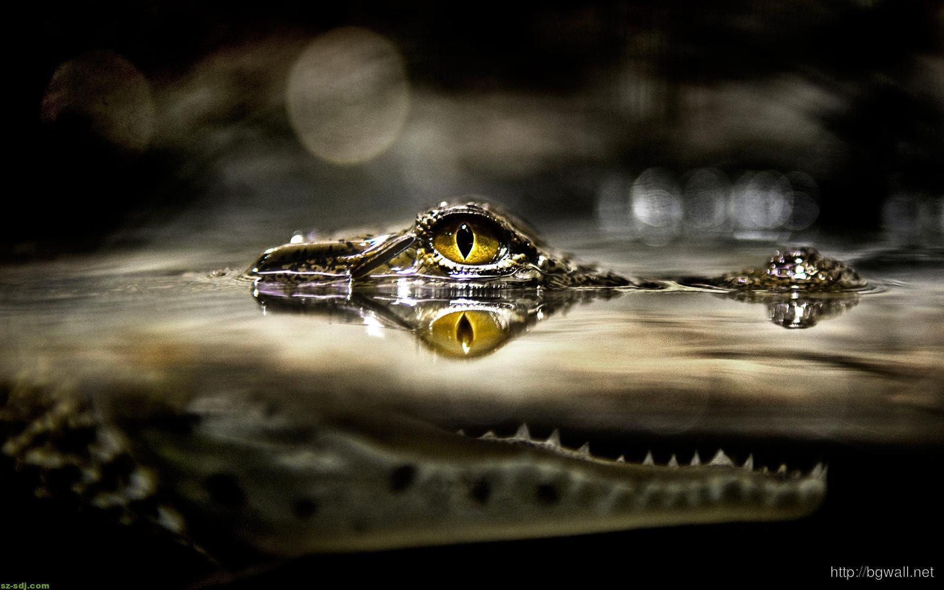 awesome-eye-alligators-wallpaper