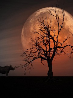 awesome-fantasy-rhino-wallpaper-widescreen