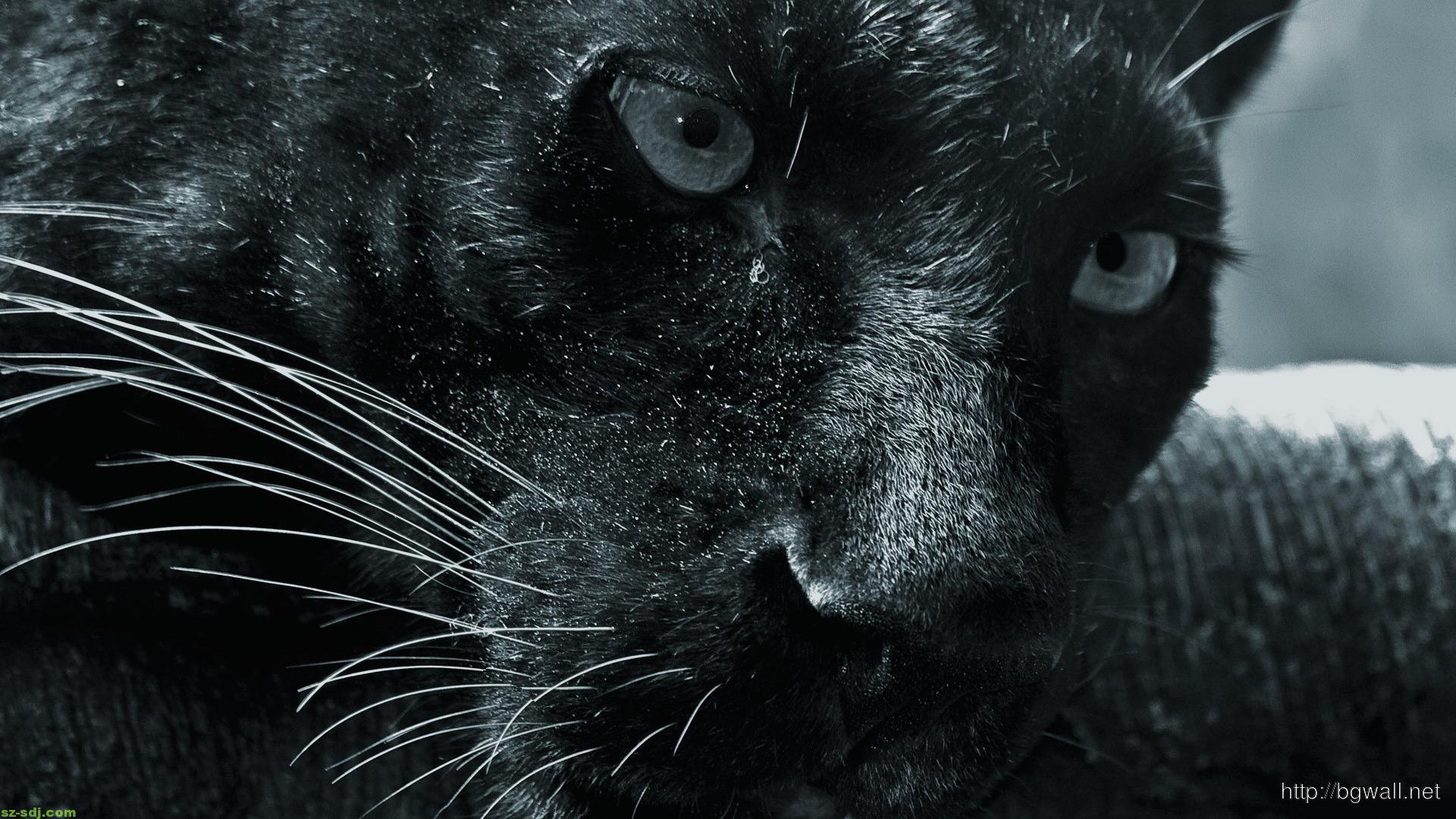 awesome-panther-wallpaper-widescreen-high-resolution