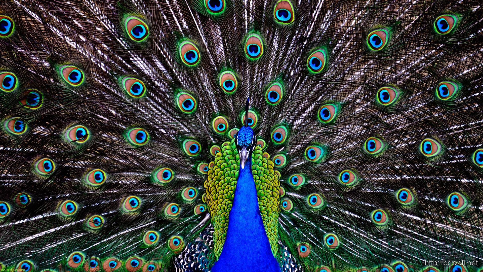 Awesome Peacock Wallpaper High Resolution – Background ...