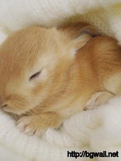 baby-bunnies-sleep-wallpaper-computer